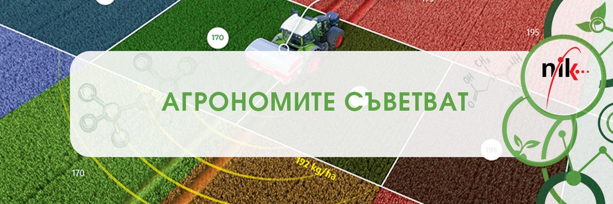Агрономите съветват: Кои са 5-те основни последствия от преторяването с азот при есенните култури?